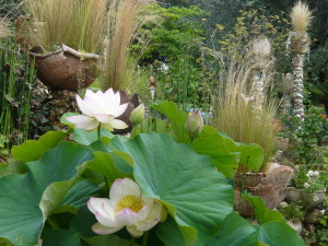 Jardin de fleurs de poterie 2009 (3)